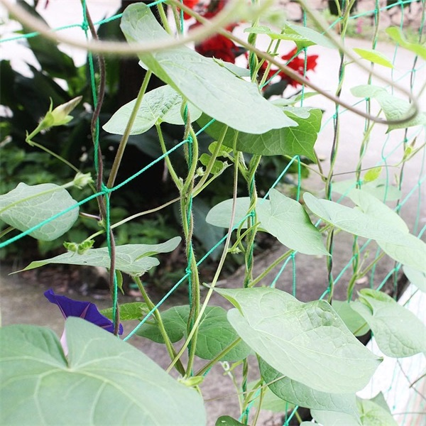 Durable Greenhouse Plant Support Netting